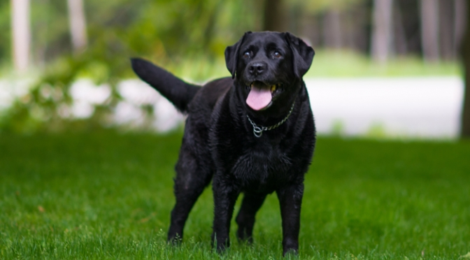 DOG FRIENDLY HOTEL|犬と泊まれる宿